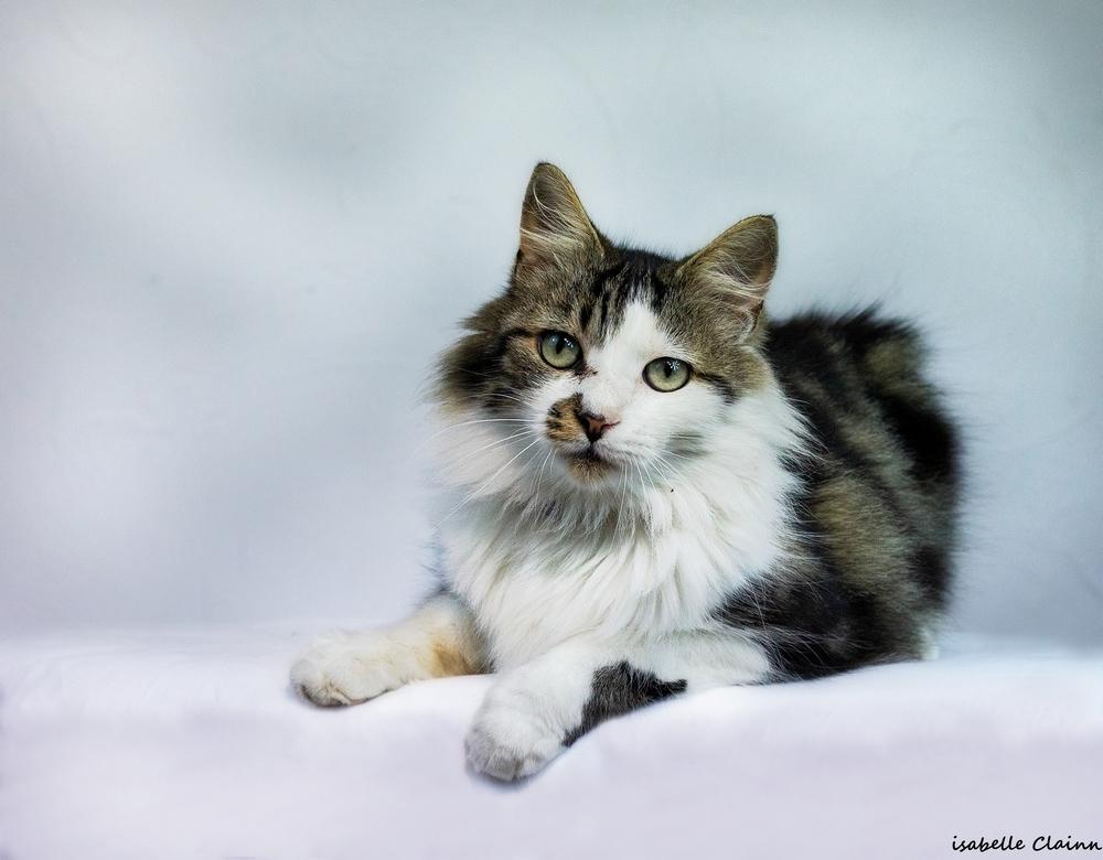 les chats 20fp.jpg