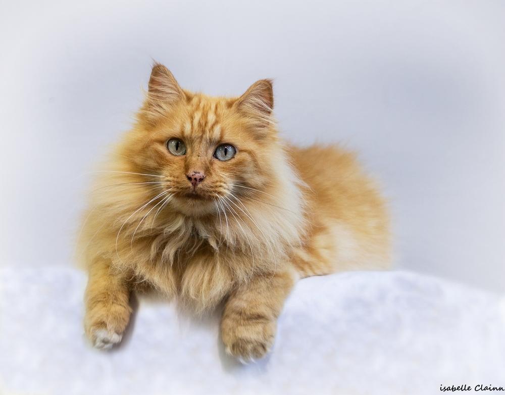 les chats 14fp.jpg
