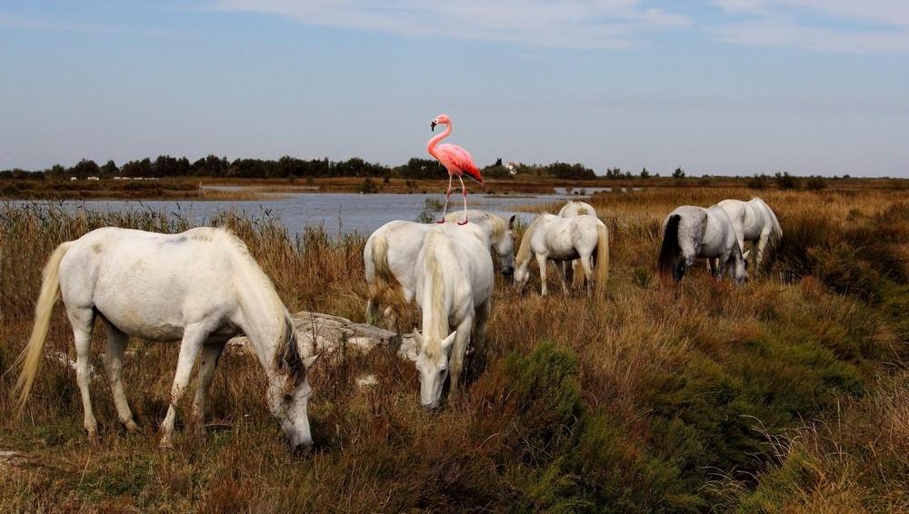 real-flamingo-1024x1024_InPixio2.jpg