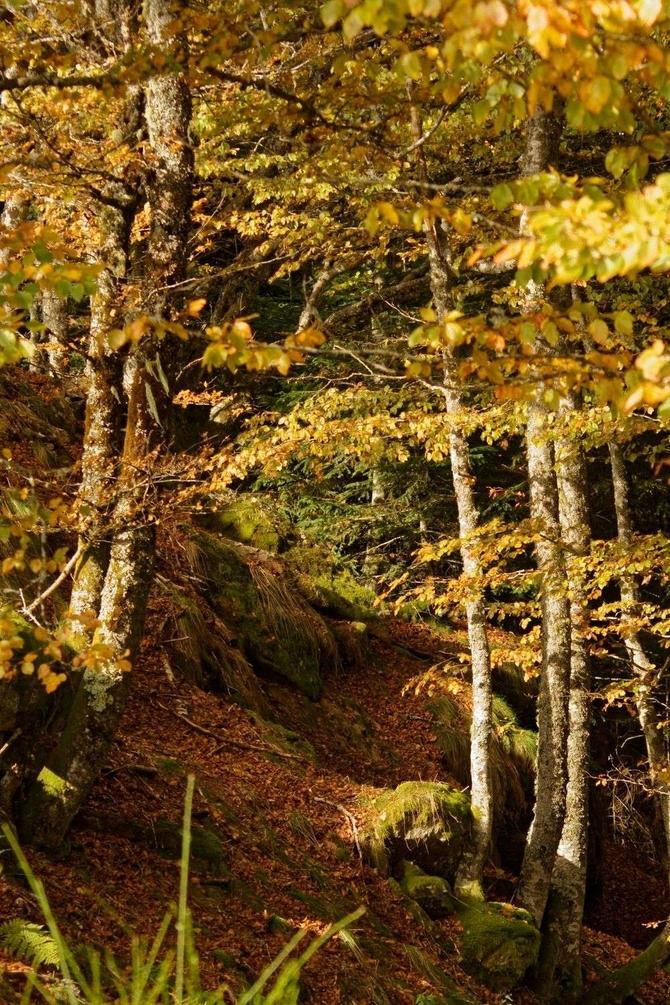 sous bois en automne1.jpg