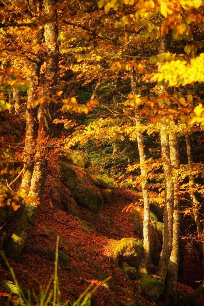 sous bois en automne 2.jpg