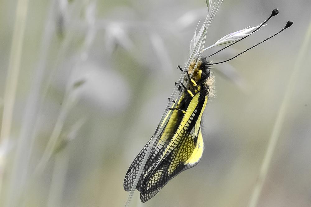 insecte.jpg