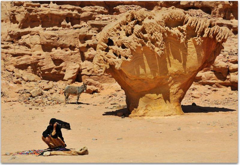 arbre de pierre Sinaï 800.jpg