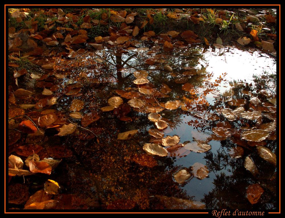 Reflet d'automne 1.jpg