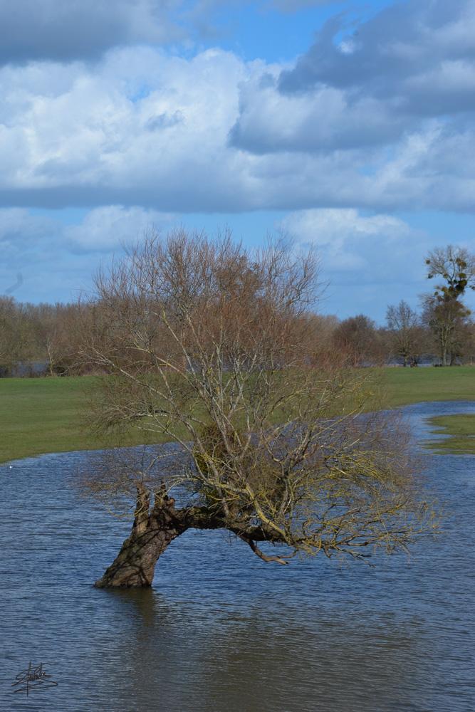 Crue de la Loire.jpg