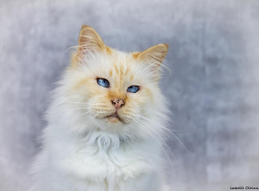 chat joue 29 2fp.jpg