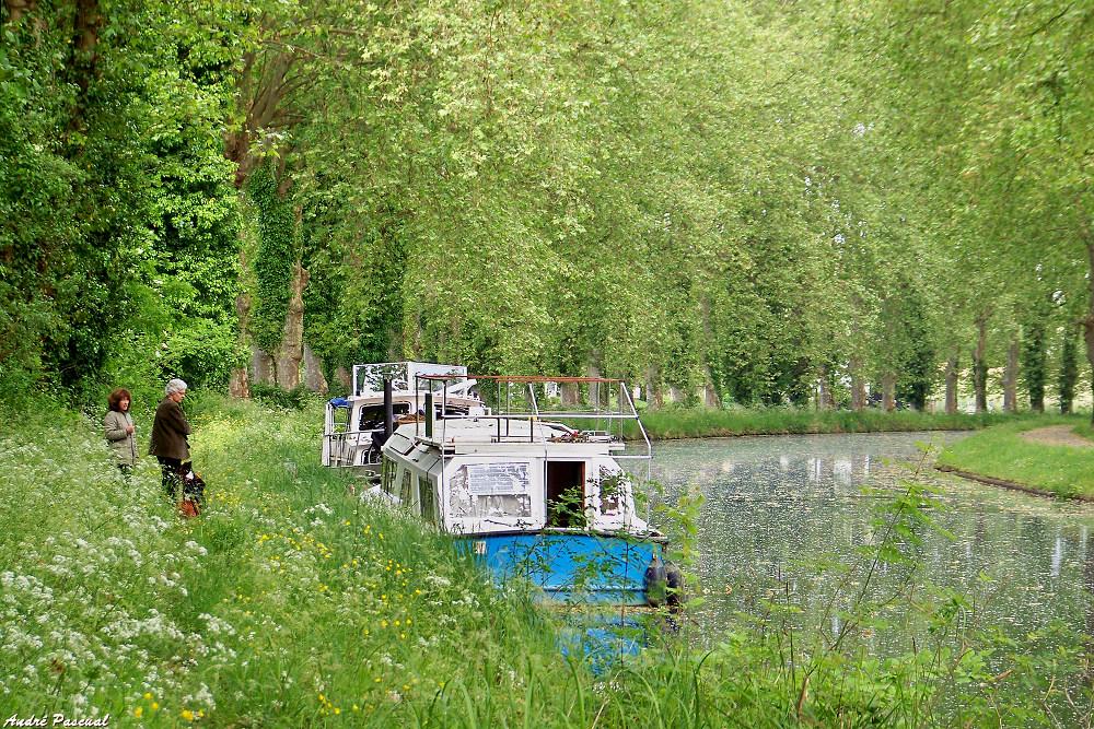 Canal_1_1000.jpg